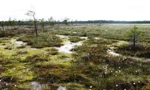 kamanų-rezervatas